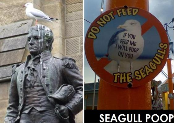 Seagull poop