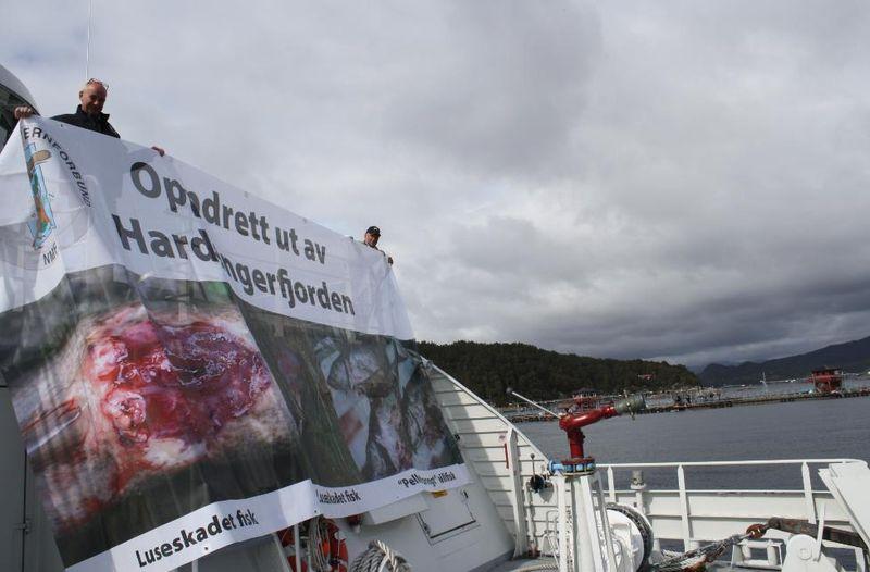 Hardangerfjord #7