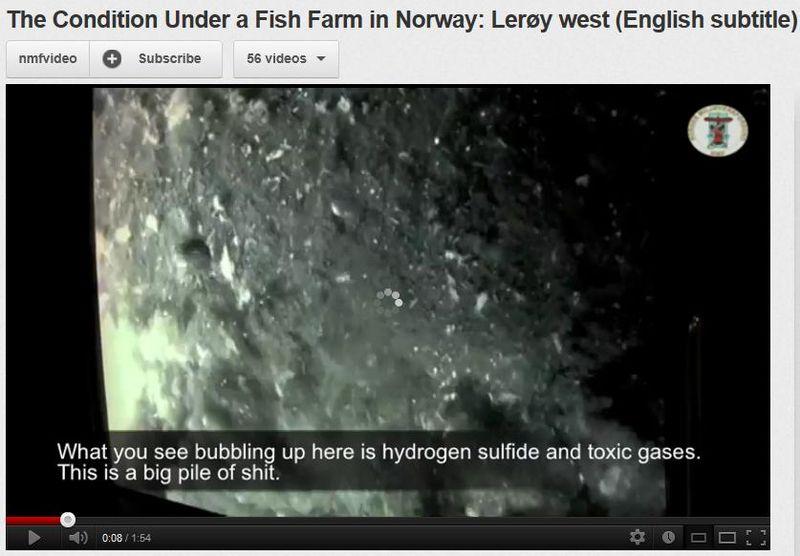 Hardangerfjord #15 video Leroy pile of shit