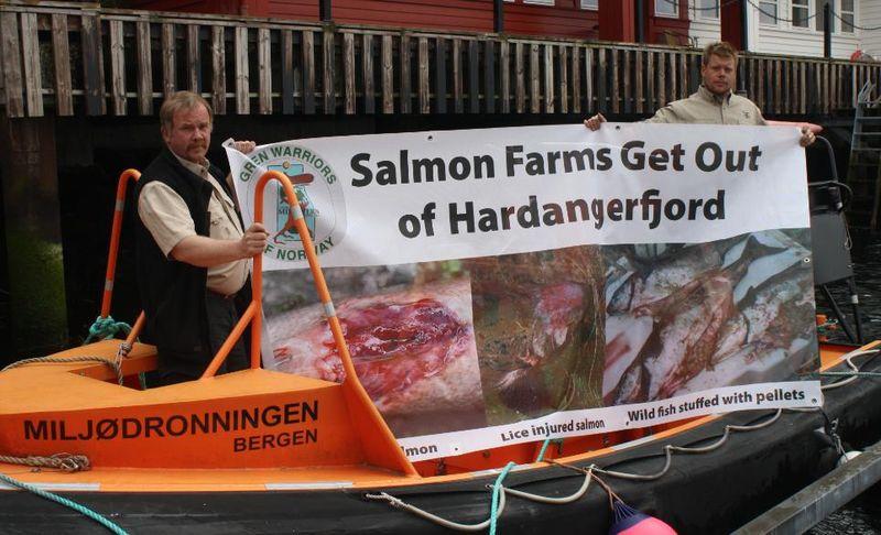 Hardangerfjord #1