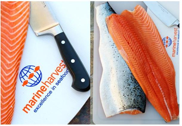 Marine Harvest farmed salmon