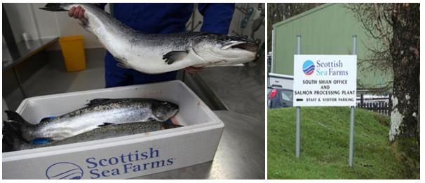 Scottish sea farms #12 South Shian processing plant