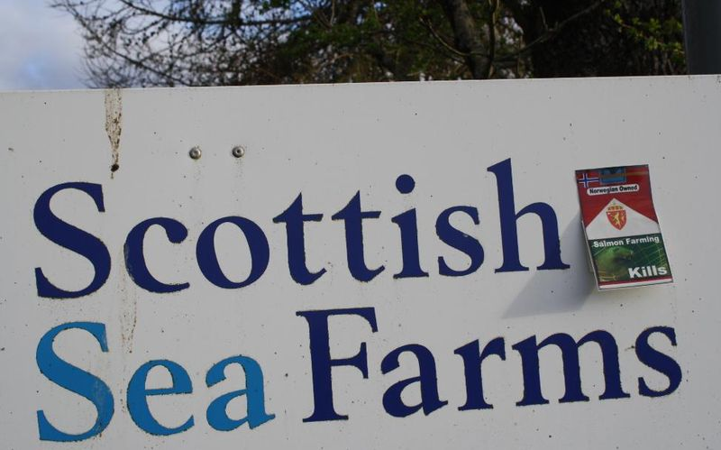 Scottish sea farms #32 dead seals