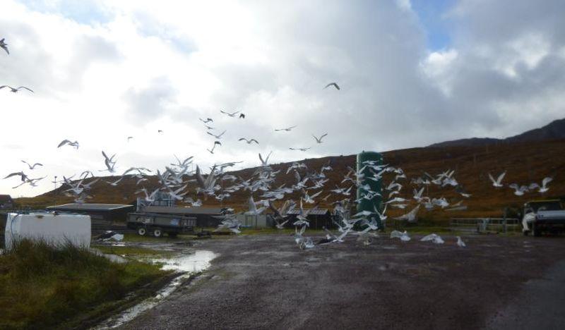 Photo #2 seagulls