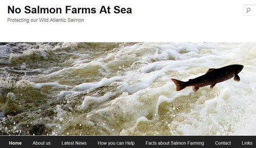 No salmon farms at sea