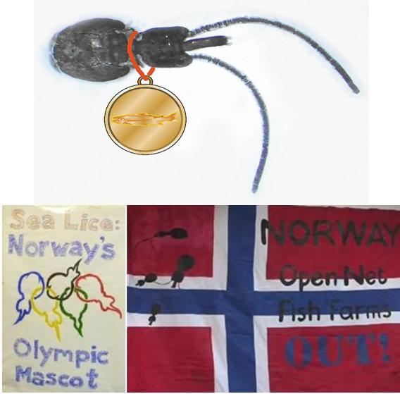 Norway flag with sea lice gold medal