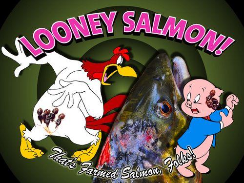 Looney Salmon