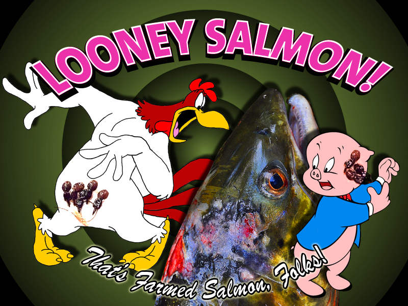 Looney Salmon