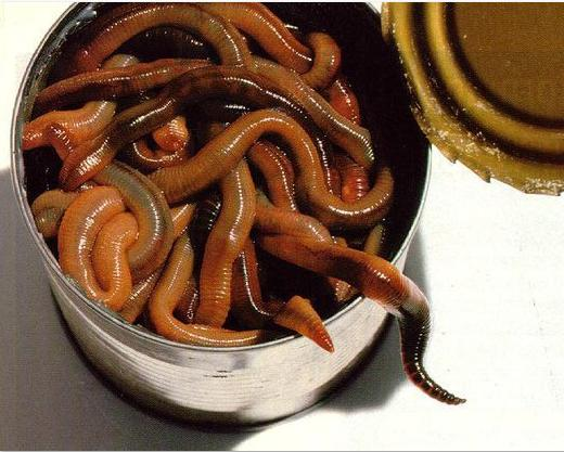 Photo #23 can of worms