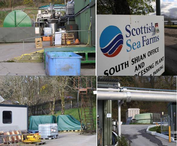 Scottish sea farms #17 South Shian collage
