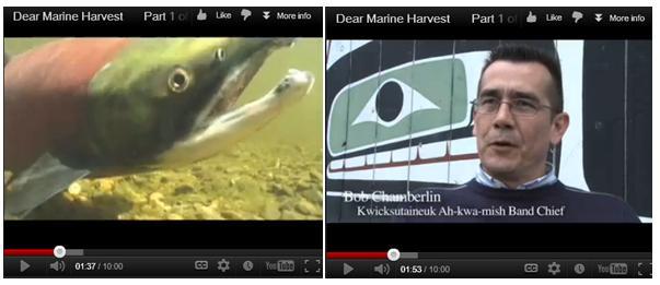 Blog #2 Dear Marine Harvest