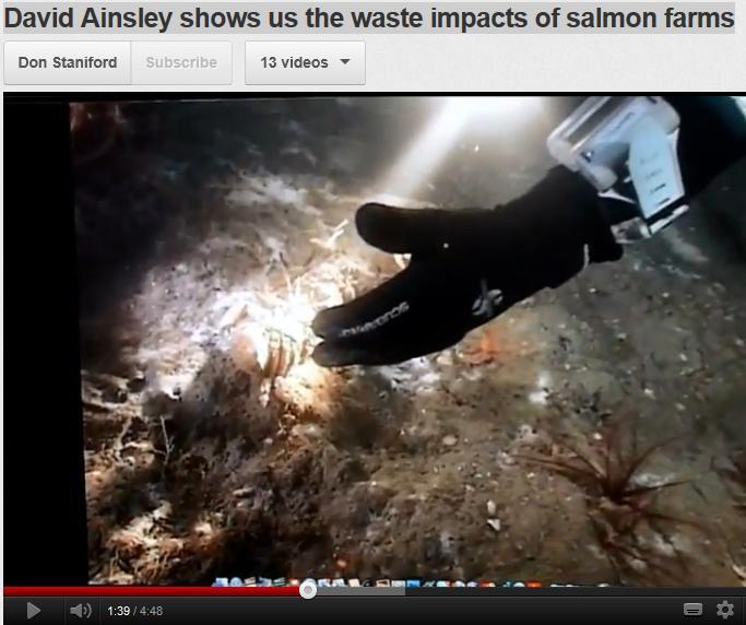 David Ainsley video
