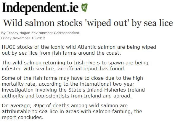 Sea lice in Irish Independent