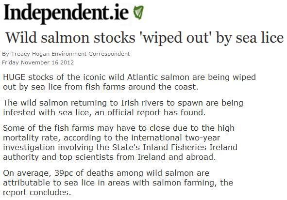 Sea lice in Irish Independent