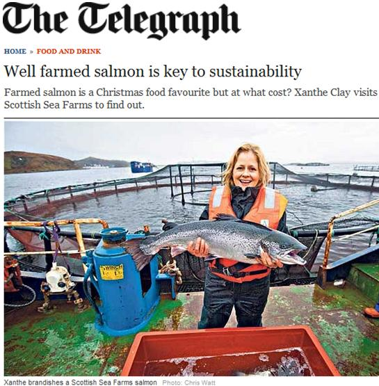 Scottish sea farms #14 Telegraph