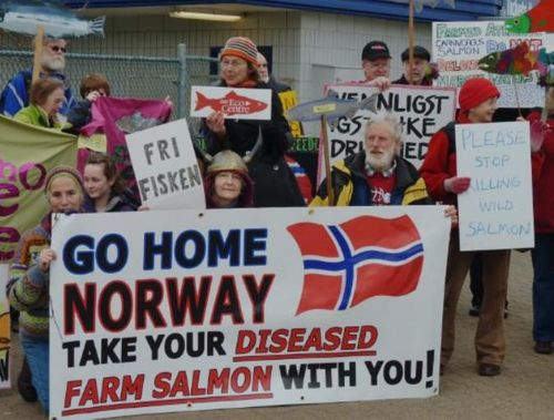 Norway Go Home Take Diseased Salmon With You