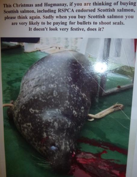 Photo #3 dead seal