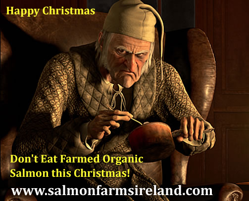 Salmon Farms Ireland #4 Scrooge