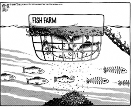Raeside sea lice cartoon