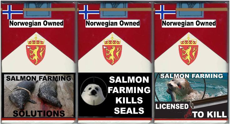 Salmon farming kills photo #1