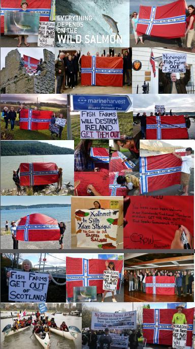 Wild Salmon First collage #2 new photos