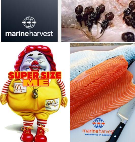 Super size Marine Harvest sea lice