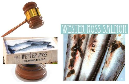 Wester Ross Salmon legal graphic