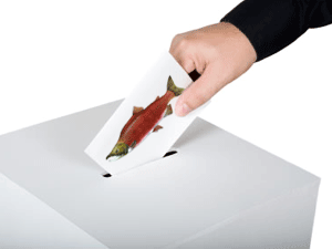 Vote wild salmon ballot