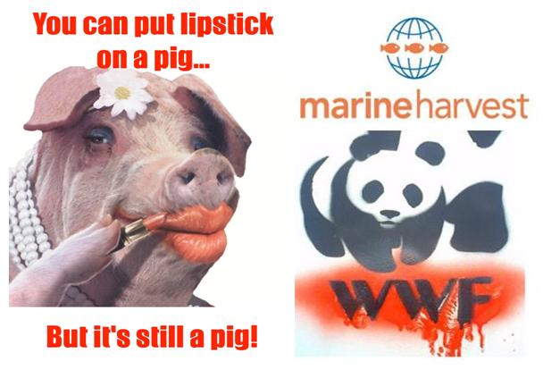 Lipstick on a pig WWF Marine Harvest