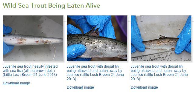 S&TA eaten alive July 2013 #4 photos