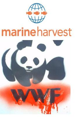 WWF MH together