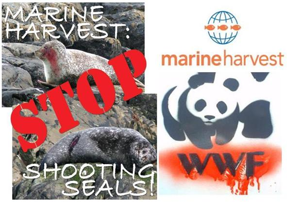 Marine Harvest flyer Stop Shooting Seals with WWF bloody logo