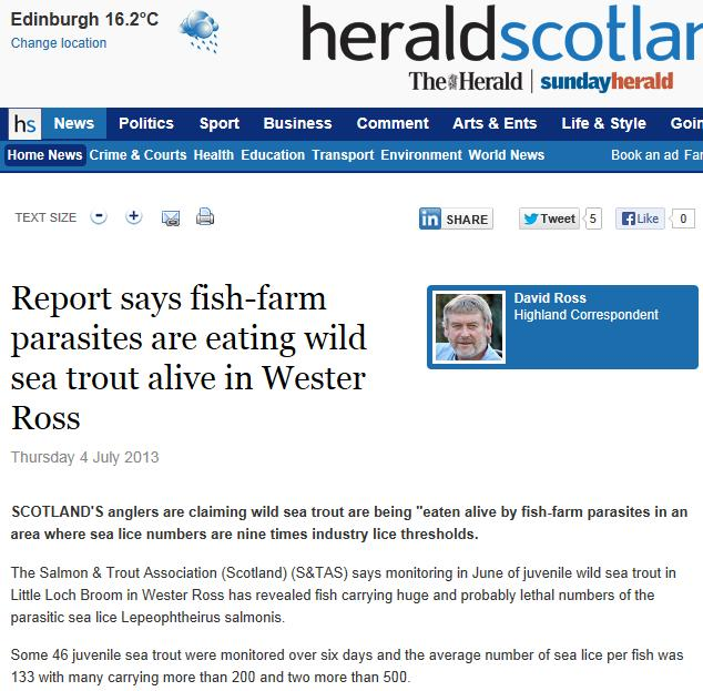 Herald on sea lice