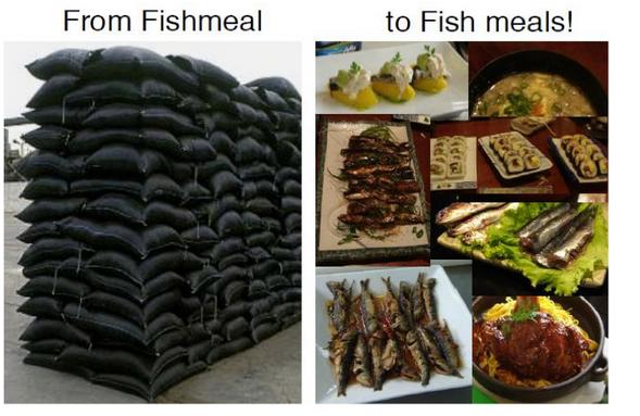 Fish meal to fish meals