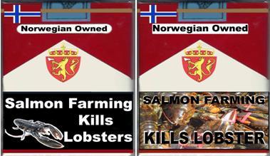2 pack lobsters