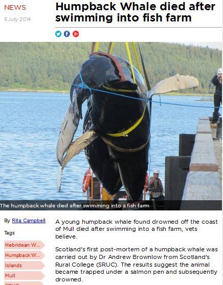 Salmon Farming Kills Whales! - The Killers!