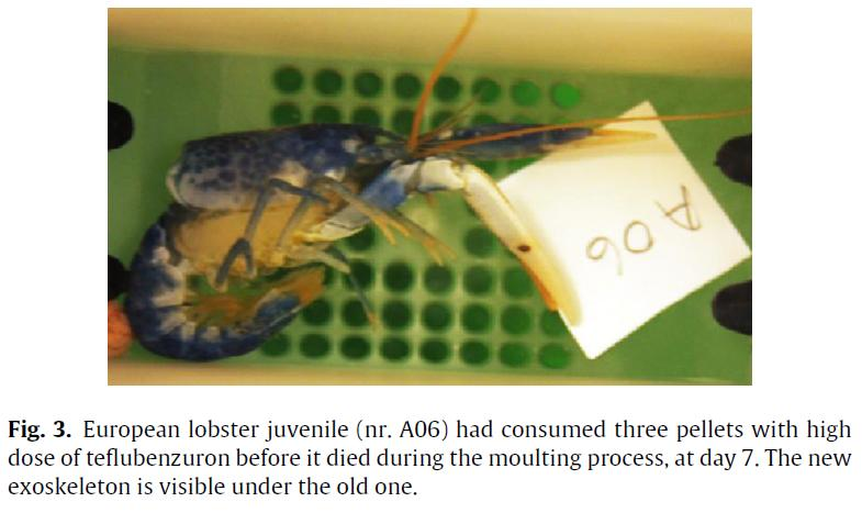 Samuelsen 2014 paper on Teflubenzuron in Aquatic Toxicology #4 photo