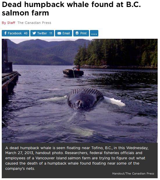 Whales #9 global