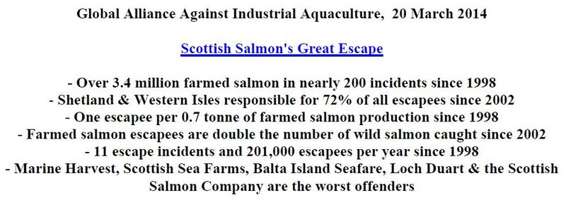 Scottish Salmon's Great Escape PR 20 March 2014 intro snapshot