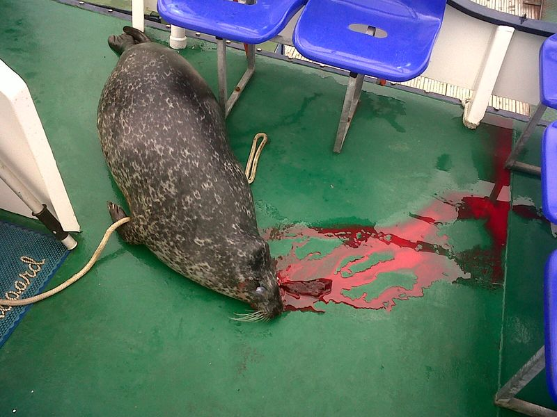 Nigel Smith photo #3 bloody seal