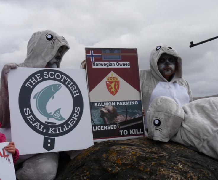 Photo #7 Scottish Seal Killers Licensed to Kill with shotgun