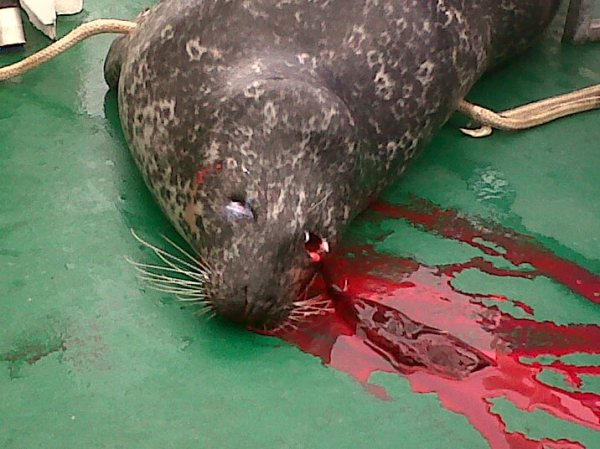 Nigel Smith photo #2 bloody seal