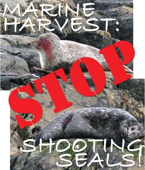 Marine Harvest flyer Stop Shooting Seals cropped without PSC logo