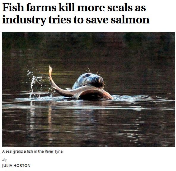The Scotsman 22 Oct 2017 1