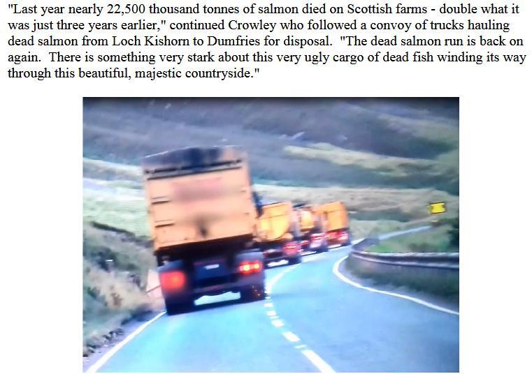 BBC Dead Salmon #2
