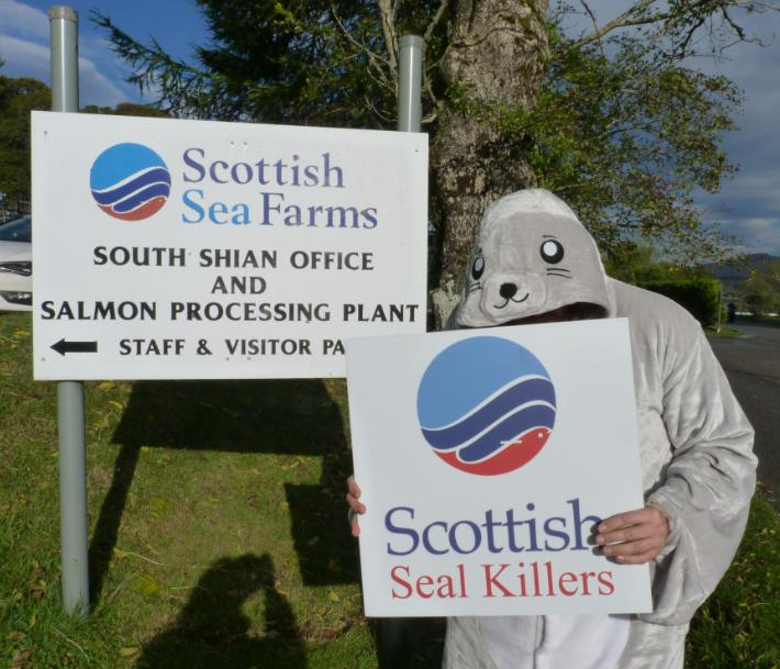 Photo #5 Scottish Seal Killers sign outside SSF head office sign