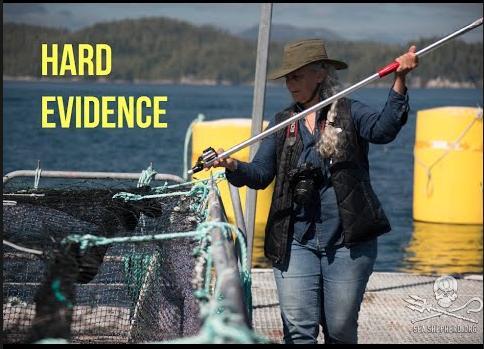 Mh sues Hard Evidence