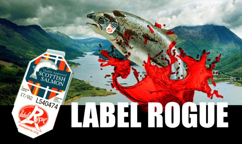 #5 Label Rogue landscape