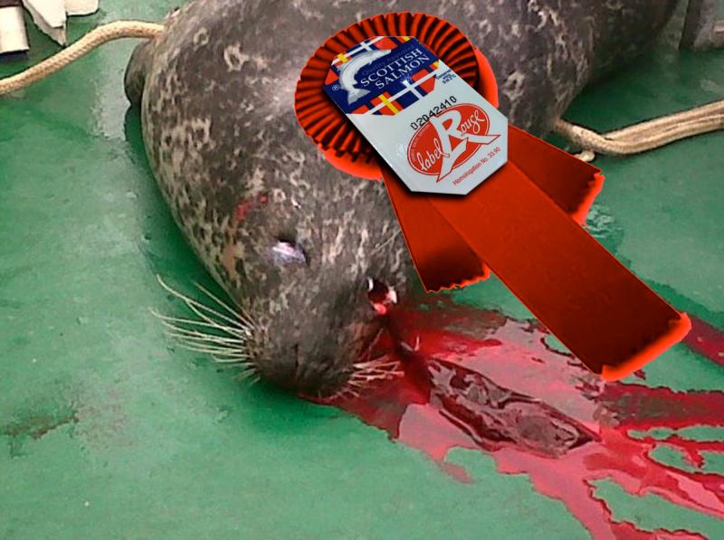 #9 Dead seal