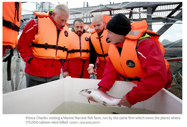Prince Charles at Marine Harvest